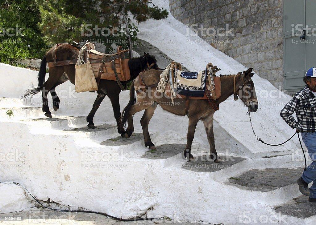 Donkeys in Hydra, Greece stock photo