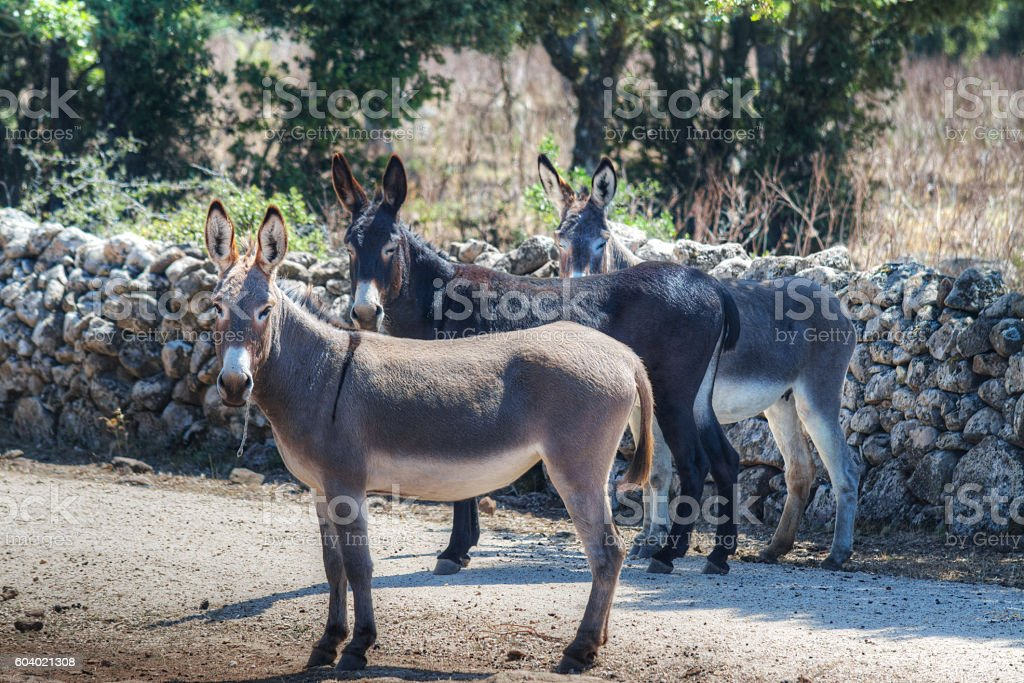 donkeys in the countryside stock photo