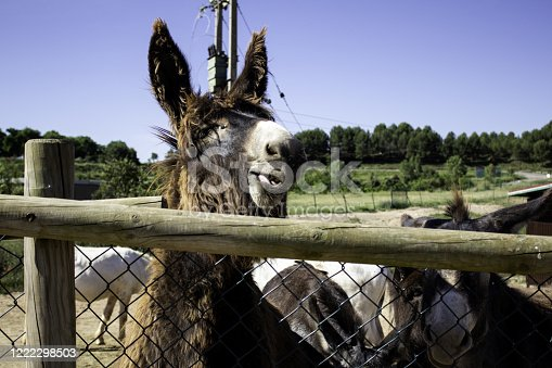 624869600 istock photo Donkeys on a farm 1222298503