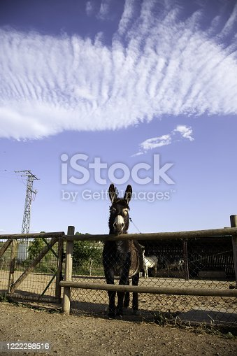 624869600 istock photo Donkeys on a farm 1222298516
