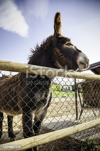 Donkeys in animal farm, natural park