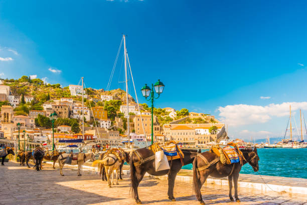 donkeys the means of transport at Hydra island Saronic Gulf Greece stock photo