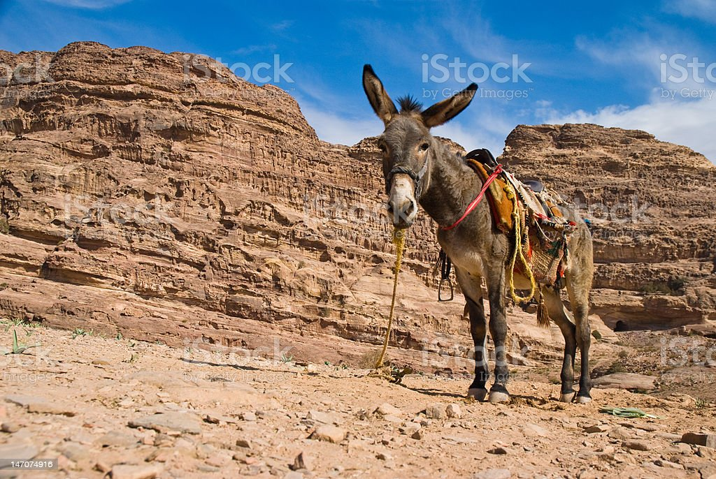 Donky in the mountain royalty-free stock photo