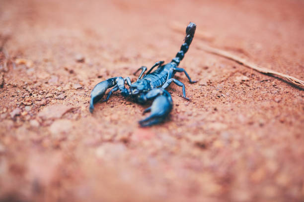don't be fooled by my size - scorpion stock photos and pictures