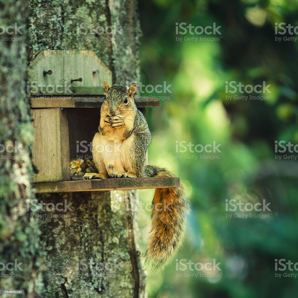 Don't bother me. I'm eating. royalty-free stock photo