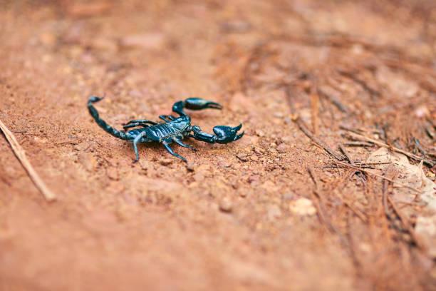 bleibt mir nicht - skorpion stock-fotos und bilder