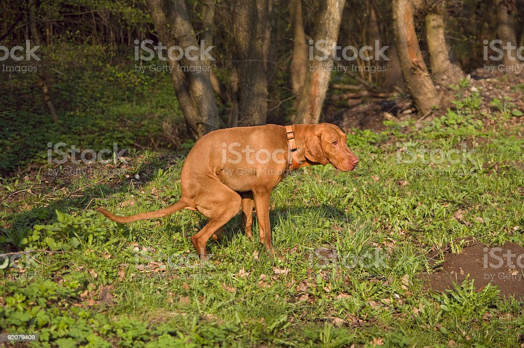 Don't poop on my grass!    - series stock photo