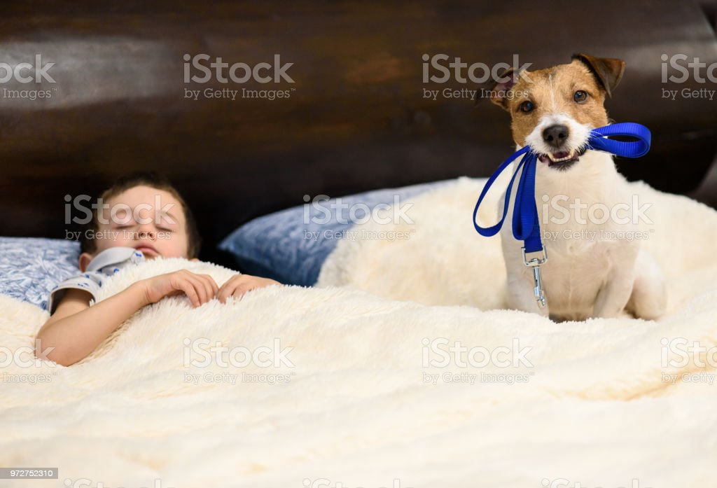Don't sleep, go for a walk with a dog concept stock photo