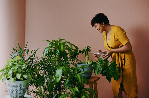 Shot of a young woman watering plants at home