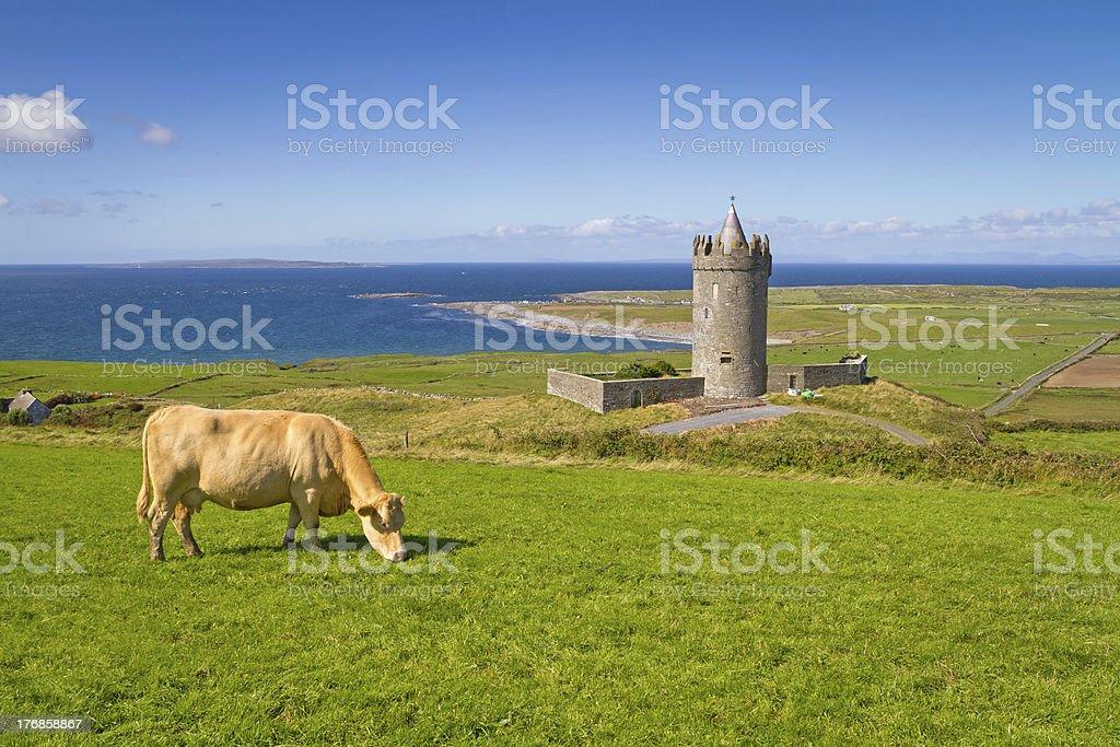 Doonagore castle with Irish cow royalty-free stock photo
