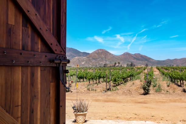 Door Opening to Vineyard in Baja California stock photo