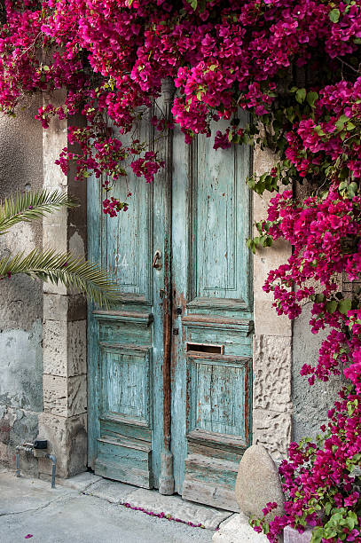 Door with bougainvillea stock photo