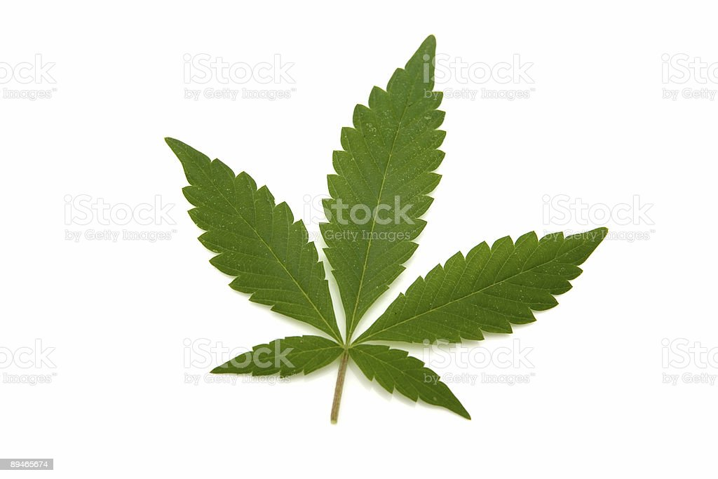 Dope leaf royalty-free stock photo