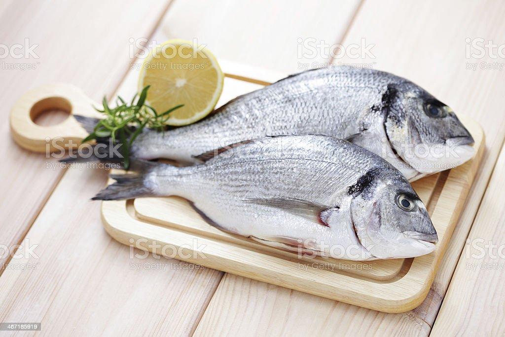 dorada fish royalty-free stock photo