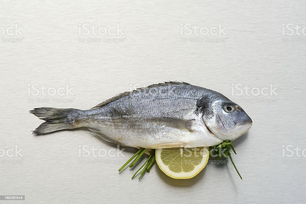 Dorade, Gilt-Head Bream stock photo