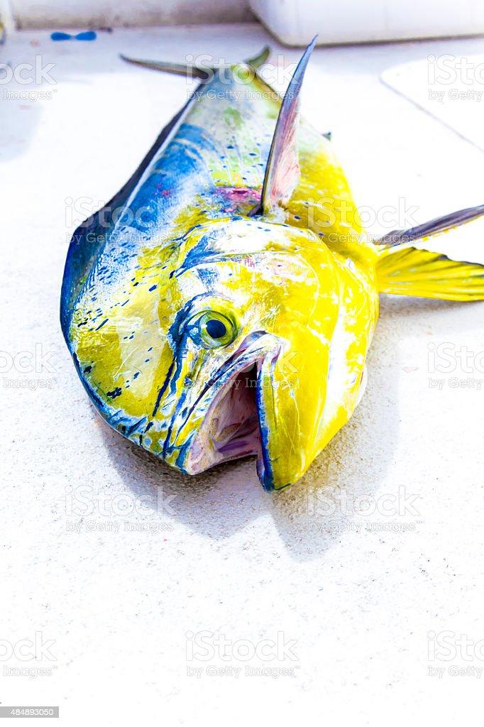 Dorado Fish on Deck, Mahi Mahi or Dolphinfish stock photo