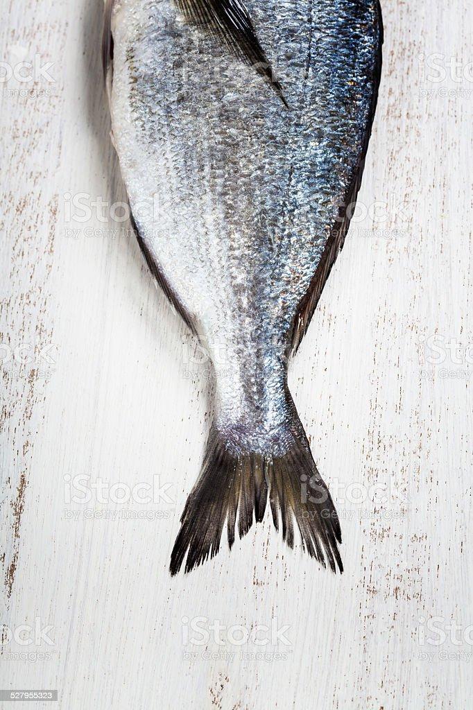 dorado fish stock photo