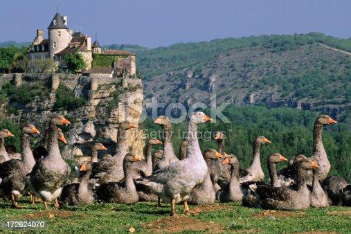 istock Dordogne Postcard 172624070