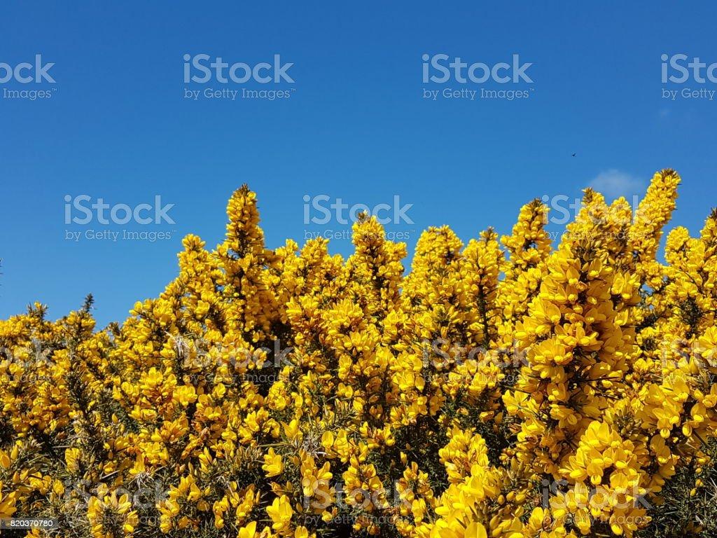 Dorset stock photo
