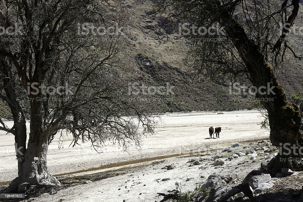 Dos caballos royalty-free stock photo