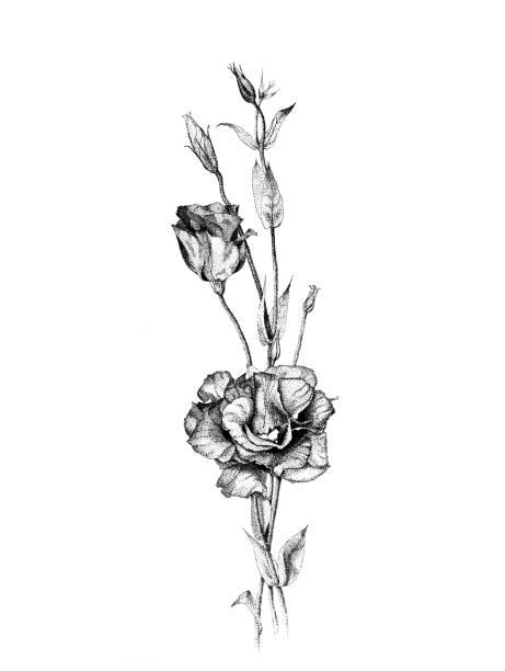 dotwork graphic flowers - штриховой рисунок стоковые фото и изображения