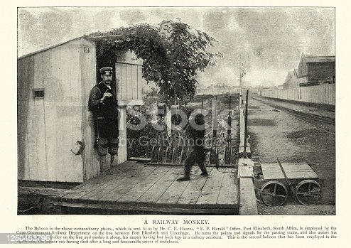Vintage photograph of a Double amputee railway signalman helped by a trained baboon,19th Century, South Africa