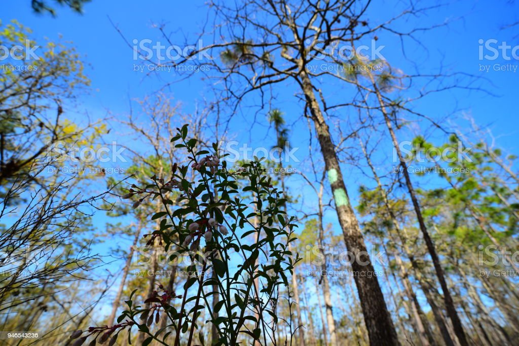 Double blaze on tree, marking change in direction on trail though forest stock photo