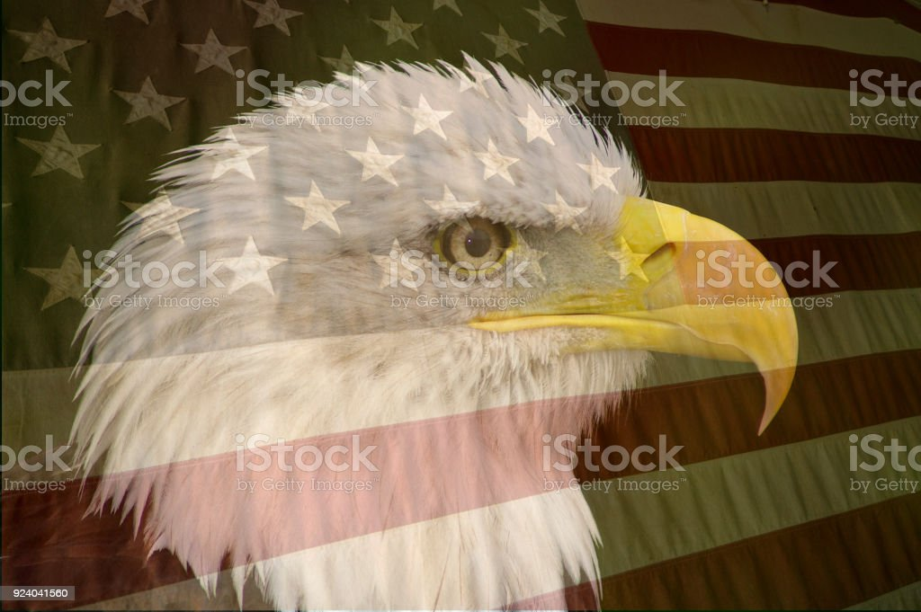 Double exposure American Flag and Bald eagle stock photo