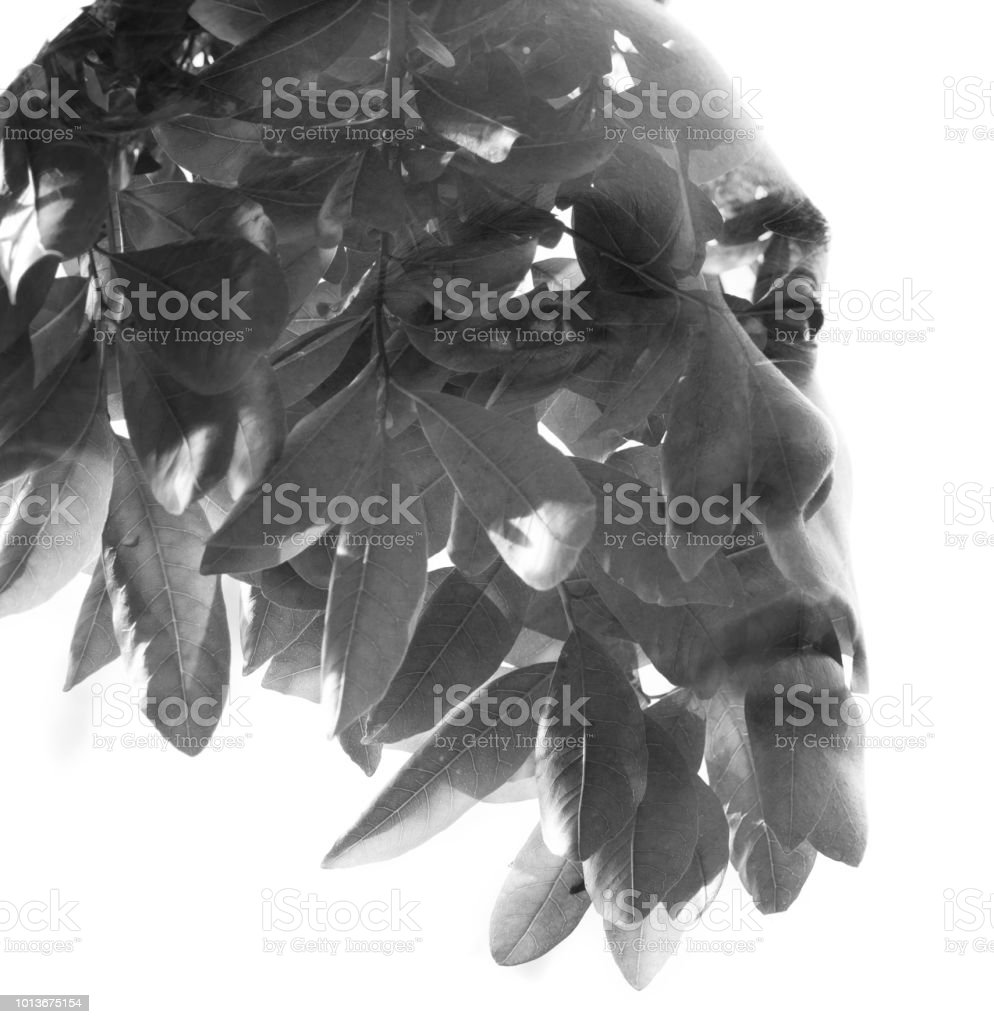Double exposure in black and white of a young sexy man blended with leaves, showing the perfect beauty of nature's creation stock photo