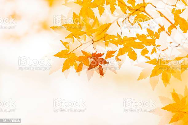 Photo of Double exposure of Autumn Leaves