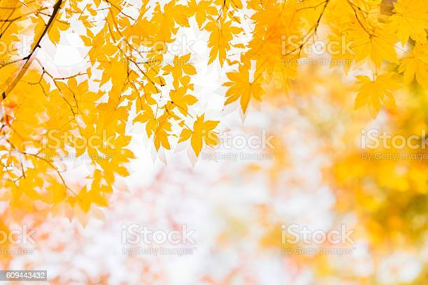 Photo of Double exposure of Autumn Yellow Leaves