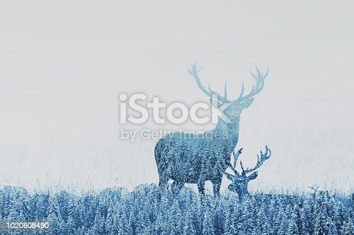 istock double exposure of two deers in winter forest 1020608490