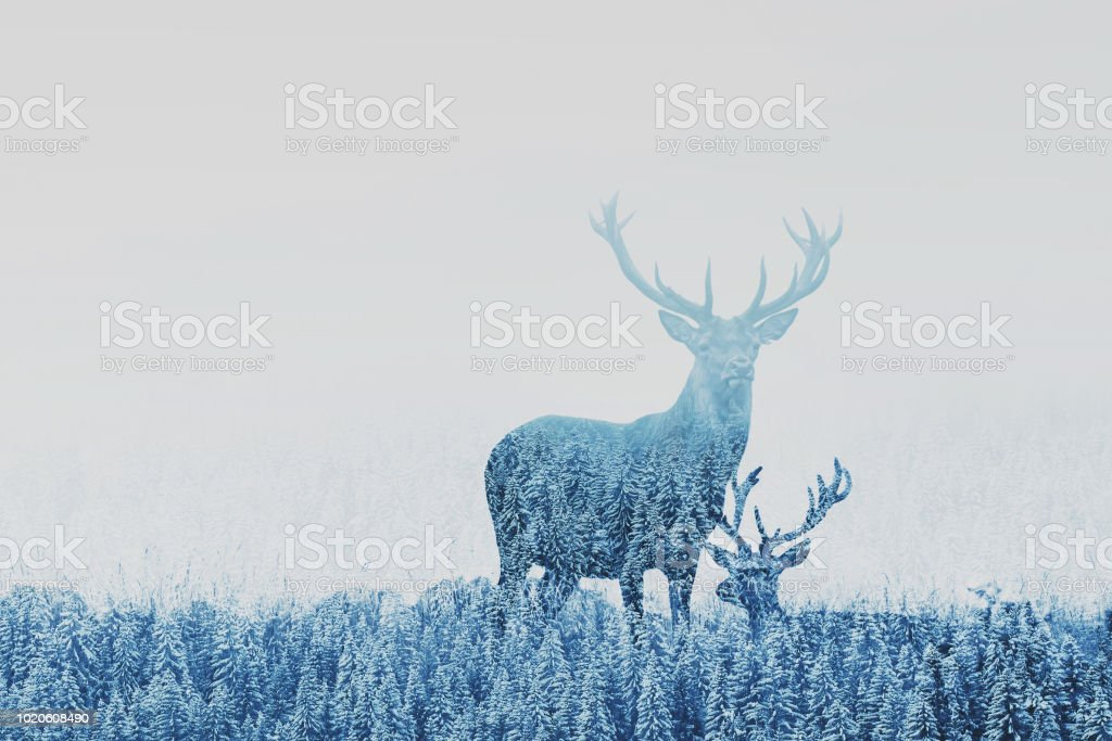 double exposure of two deers in winter forest stock photo