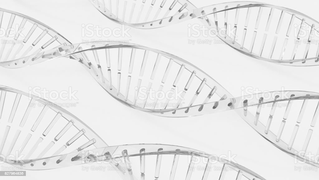 DNA Double helix models stock photo