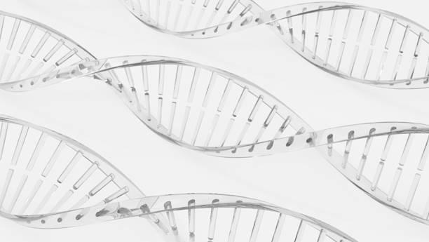 Modèles à hélice ADN Double - Photo