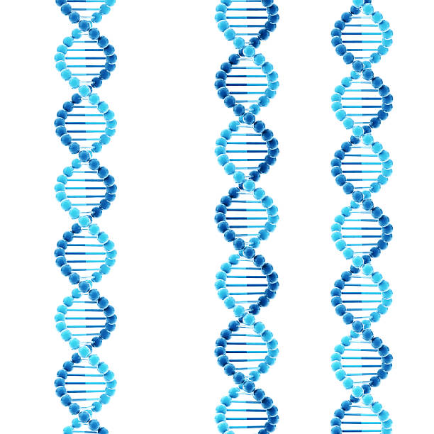 DNA Double Helix Molecular Structure 3D Render of some simplified DNA molecular structures against a white background. Very high resolution available! Use it for Your own composings!Related images: abstract 3d stock pictures, royalty-free photos & images
