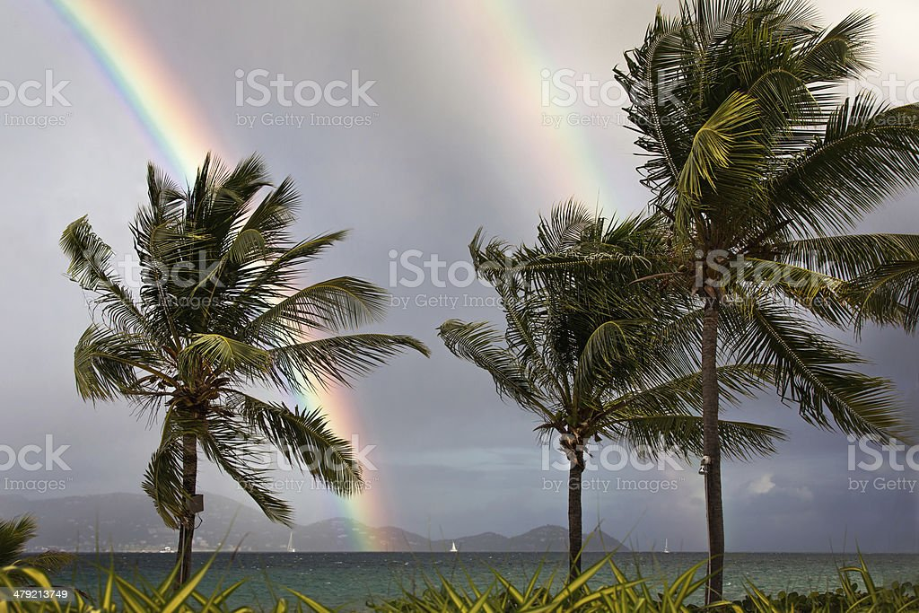 Double Rainbow and Palm Trees stock photo