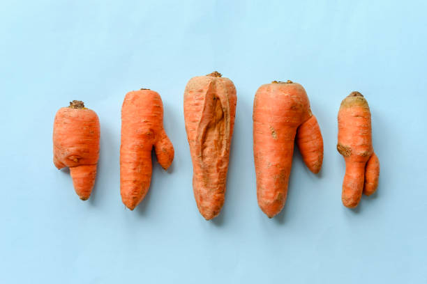 Double shaped and cracked carrots stock photo