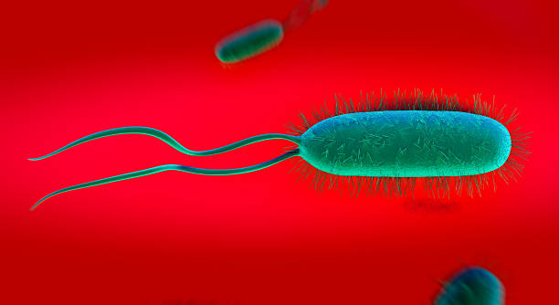 Doubled tailed green bacteria through a microscope Helicobacter pylori bacterium gram stain stock pictures, royalty-free photos & images