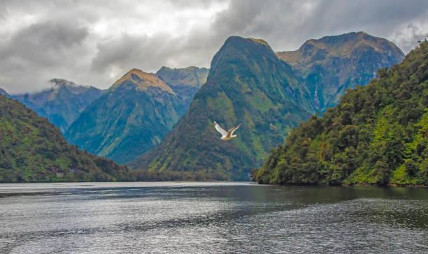 Doubtful Sound, South Island, New Zealand stock photo