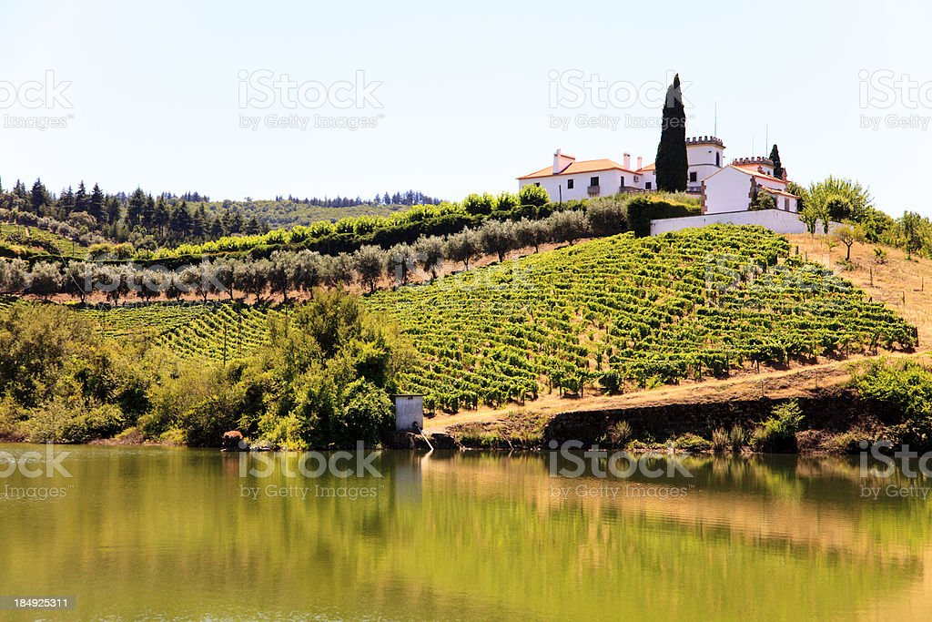 Douro slopes stock photo