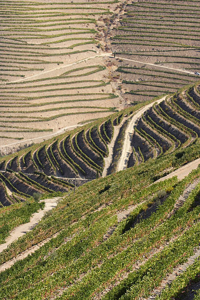 Douro valley and vineyards stock photo