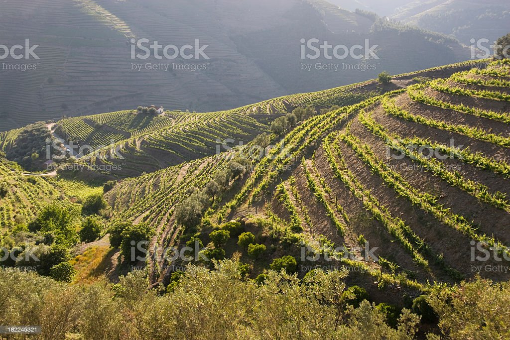 Douro Valley filled with plants stock photo