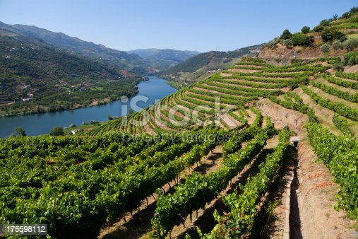 Ladscape in Douro Valley-more files in my portfolioTaken With a Full Frame Digital Camara