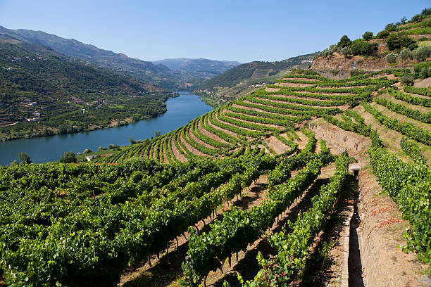 Douro Valley Ladscape in Douro Valley-more files in my portfolioTaken With a Full Frame Digital Camara duero stock pictures, royalty-free photos & images