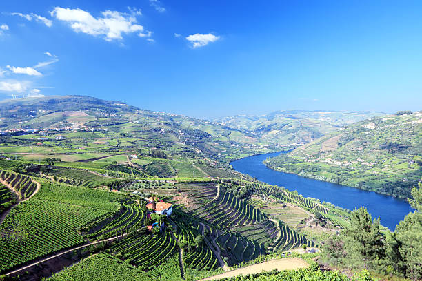 Douro Valley Vineyards in Douro Valley, Portugal duero stock pictures, royalty-free photos & images