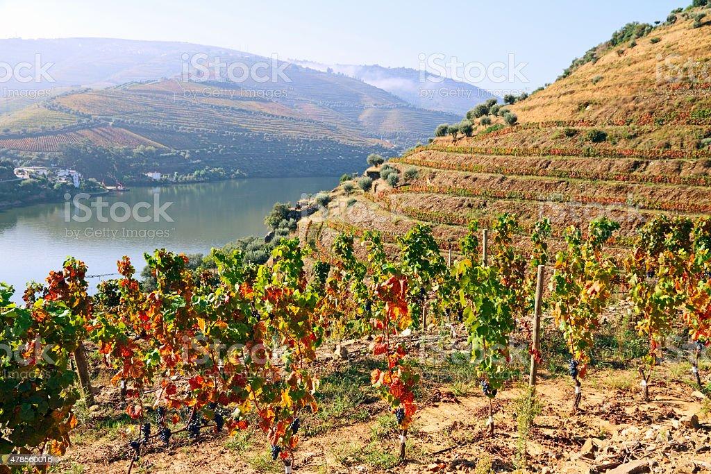 Douro valley stock photo