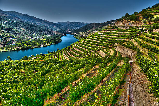 Douro Valley Ladscape in Douro Valley-Barragem do Pocinho-more files in my portfolio.Taken With a Full Frame Digital Camara duero stock pictures, royalty-free photos & images