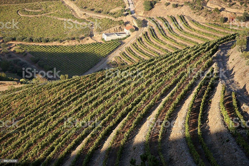 Douro Valley royalty-free stock photo