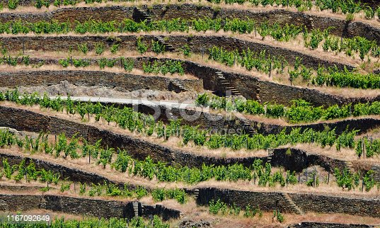 Rock wall terraced hillside vineyard above the Douro Valley in Portugal.